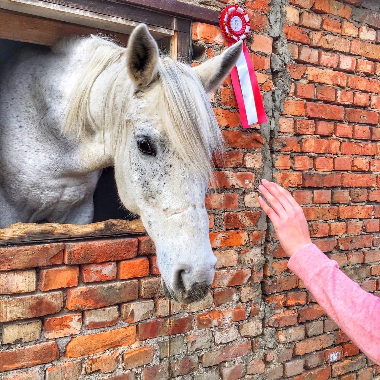 Лошадь — лучшее лекарство